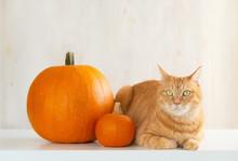 猫とハロウィンに飾るかぼちゃ