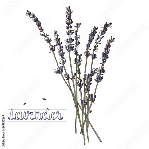 Photo  Vector illustration of a lavender bouquet on a white background