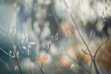 Spring Tender Flowering Bush O...