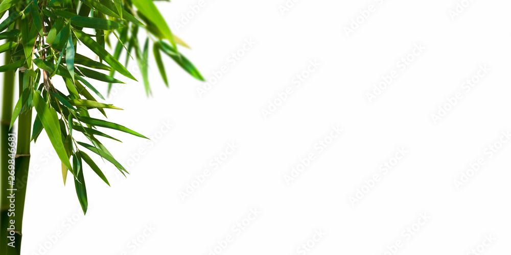 bambuszweig auf weiss