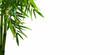Leinwandbild Motiv bambuszweig auf weiss