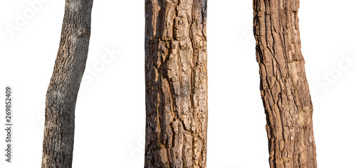 isolated tree trunk Collection on White Backdrop Tableau sur Toile