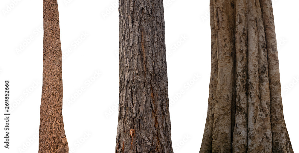 Fototapety, obrazy: isolated tree trunk Collection on White Backdrop