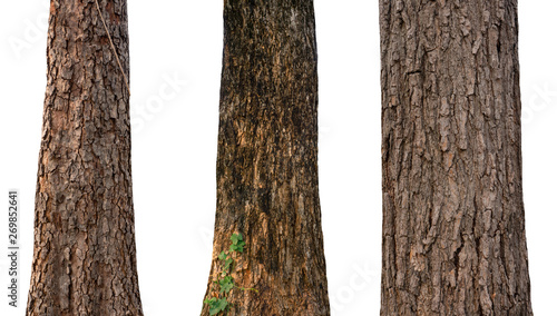 Fototapeta isolated tree trunk Collection on White Backdrop