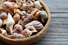 Collection Of Beautiful Seashells In A Basket On Old Wooden Background. Summer Beach Vacation Concept With Copy Space.Selective Focus.