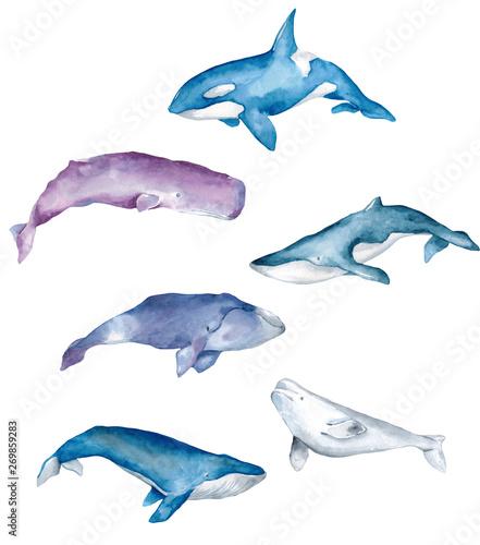 Zestaw wielorybów akwarela malowane na białym tle. Ręcznie rysowane akwarela ilustracja morskich mieszkańców dla projektu
