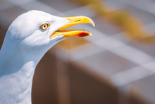 Close Up Of A Seagull Head And Eye With Its Yellow Beak With Red Marking Open With Possible Copy Space And An Unusual  Industrial Defocused Background