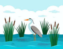 An Elegant European Heron Stands In A Pond With Reeds And River Fish. Landscape Pond.
