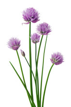 Chives Or Allium Schoenoprasum...