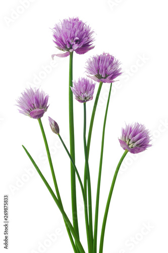 Chives or Allium schoenoprasum isolated on white. Canvas Print