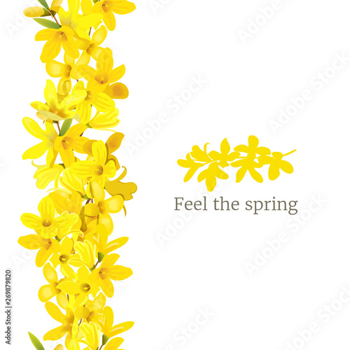 Photo Forsythia suspensa frame left border