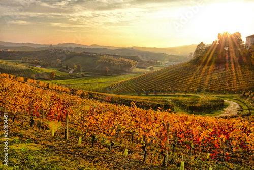 Paesaggio delle Langhe. © bussiclick