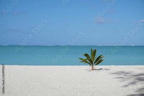 Spoed Fotobehang Eiland Palme am Strand