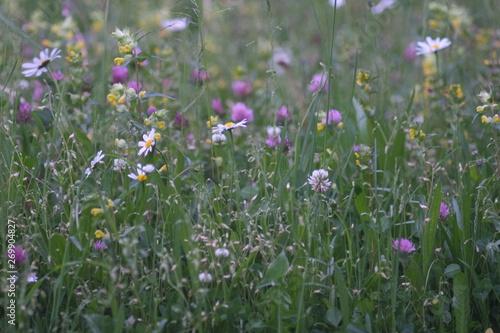 Foto op Plexiglas Weide, Moeras Wildblumen im Garten gegen Bienensterben