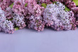 purple background with lilac, selective focus. spring floral backdrop.