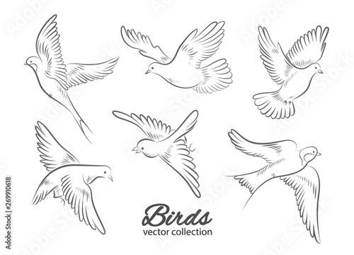 Valokuvatapetti Set of hand drawn birds isolated on white background