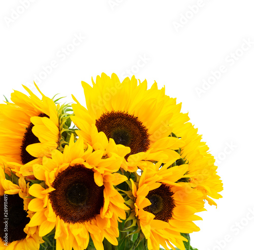 Sunflowers on white