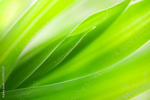 Fotografie, Obraz  Green leaf background