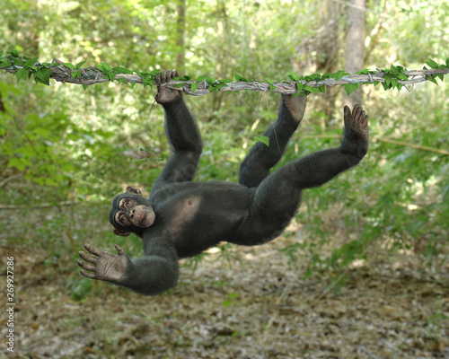Chimp Hanging on a Vine Canvas Print