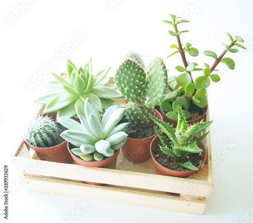 Poster Graphic Prints Succulents and cacti in the box. White background.