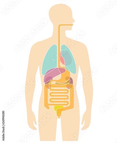 Valokuvatapetti Human body internal organs illustration - Lungs, Heart, Liver, stomach, etc