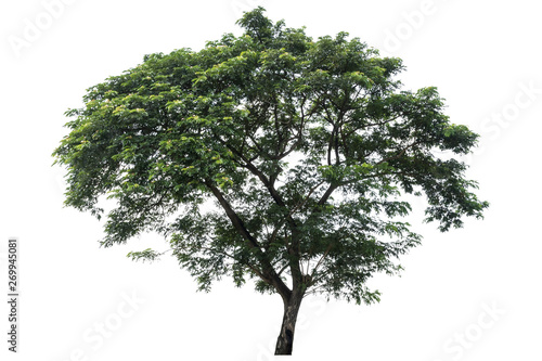 Fotografia, Obraz  Beautiful fresh green deciduous tree isolated on pure white background for graphic