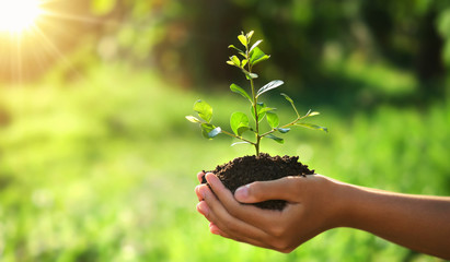 eco earth day concept. hand holding young plant in sunshine and green nature background