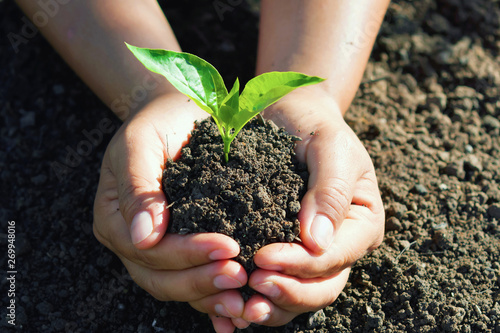Vászonkép hand holding young tree for planting. concept eco earth day