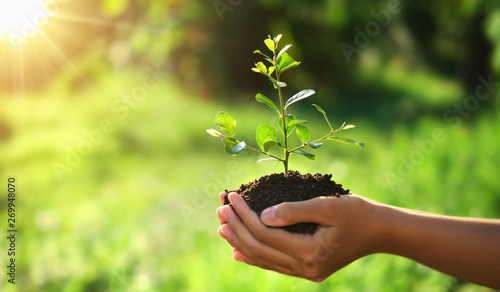 Obraz eco earth day concept. hand holding young plant in sunshine and green nature background - fototapety do salonu
