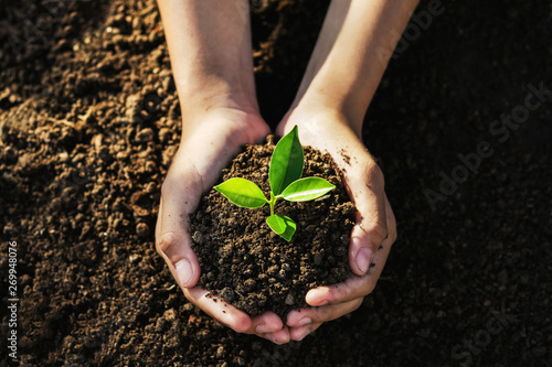 hand holding young tree for planting. concept eco earth day Fototapet