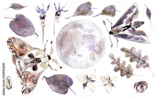 Fotografie, Obraz  Watercolor mystical collection. Moon, moths, leaves and plants.