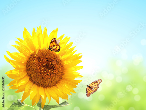 Spoed Foto op Canvas Zonnebloem Sunflowers and two butterflies on blurred sunny background
