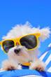 Leinwandbild Motiv funny dog in sunglasses