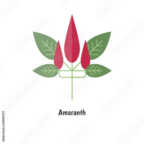 Amaranthus or amaranth. Canvas Print
