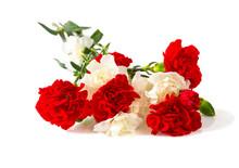 Carnation Flowers Isolatde On White
