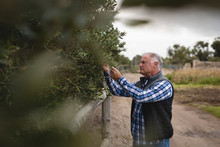 Male Senior Farmer Looking At Tree While Standing At Field