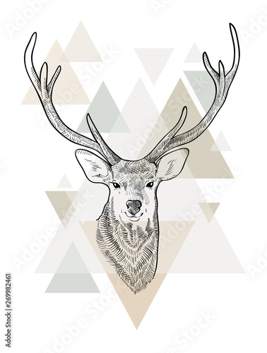 Hand drawn head of deer. Scandinavian style