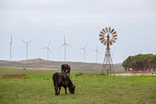 The Old And The New In Harnessing Wind Power