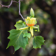 Amazing Nature Floral Backgrou...