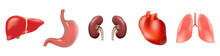 Different 3D Human Organs Set With Heart Lungs Liver Stomach Kidneys Isolated On White Background Vector Illustration, Eps 10