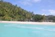 private island beach seychelles palm coconut sand sun