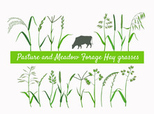 Set Of Vector Vintage Style Botanical Illustration Of Hay And Forage Plants