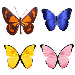 tropical butterflies isolated on white.