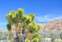 Joshua Tree, Endemic Species A...