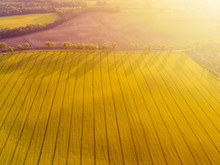 Aerial View Of Yellow Canola F...