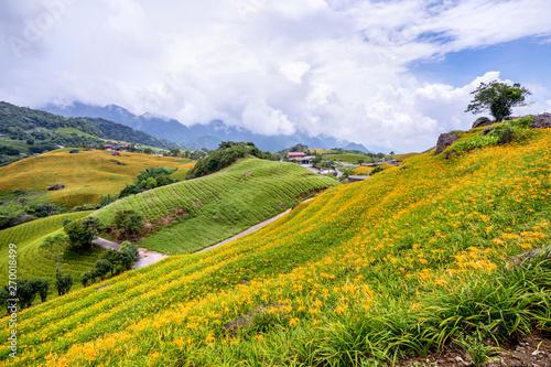 Fototapeta Beautiful orange daylily flower farm on Sixty Rock Mountain (Liushidan mountain)