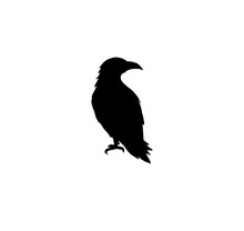Raven Silhouette Isolated Vector