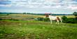 Leinwandbild Motiv Horse on a farm in Kentucky