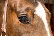 Eye Of Horse Chestnut Suit