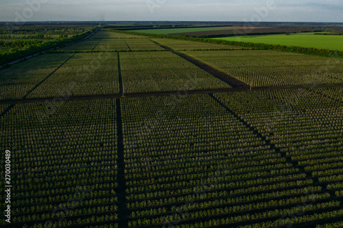 Obraz Aerial view of farmland with agriculture fields, green meadows till horizon - fototapety do salonu